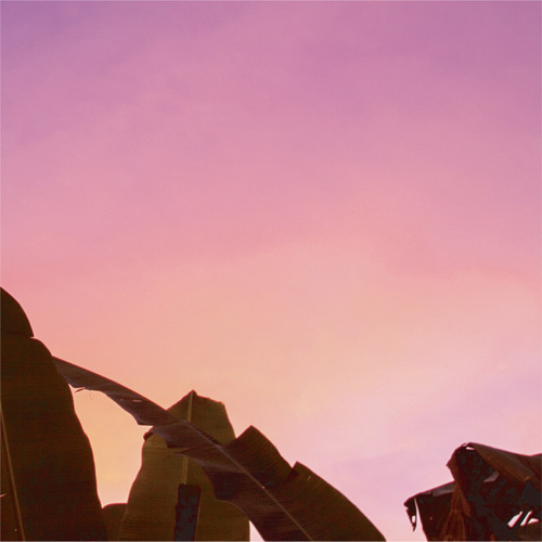 画像1: COLORS/CHAR ピンク (1)